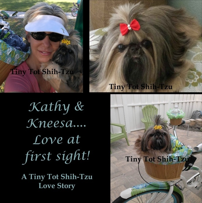 Tiny Tot Shih Tzu Retired Imperial Shih Tzu mom