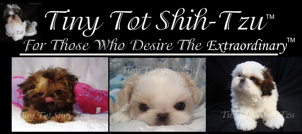 Tiny Tot Shih Tzu | Imperial Shih Tzu Puppies